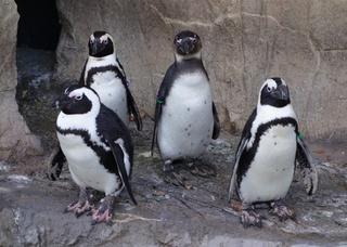 Denver_Zoo_2014-01-11_1.jpg