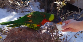 Denver_Zoo_2014-01-11_4.jpg