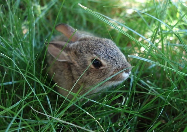 bunny_2014-06_7888.jpg