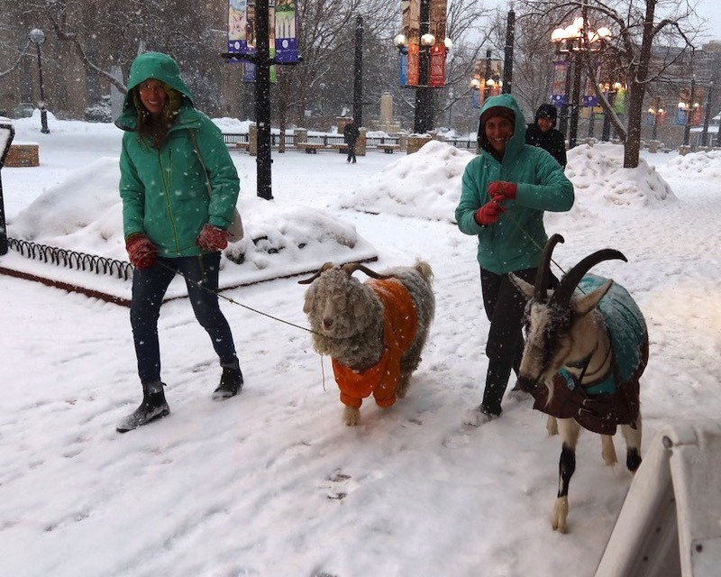 goat_boulder_downtown_2020-02_2829.jpg