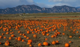 halloween_pumpkin_boulder_co_2017-10_7072.jpg