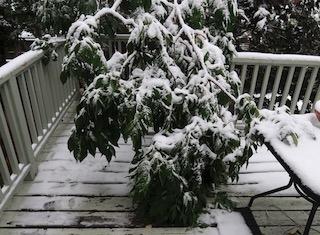 snow_colorado_2020-09-09_6164_320p.jpg