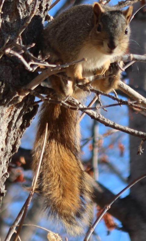 squirrel_boulder_2020-01_1900.jpg